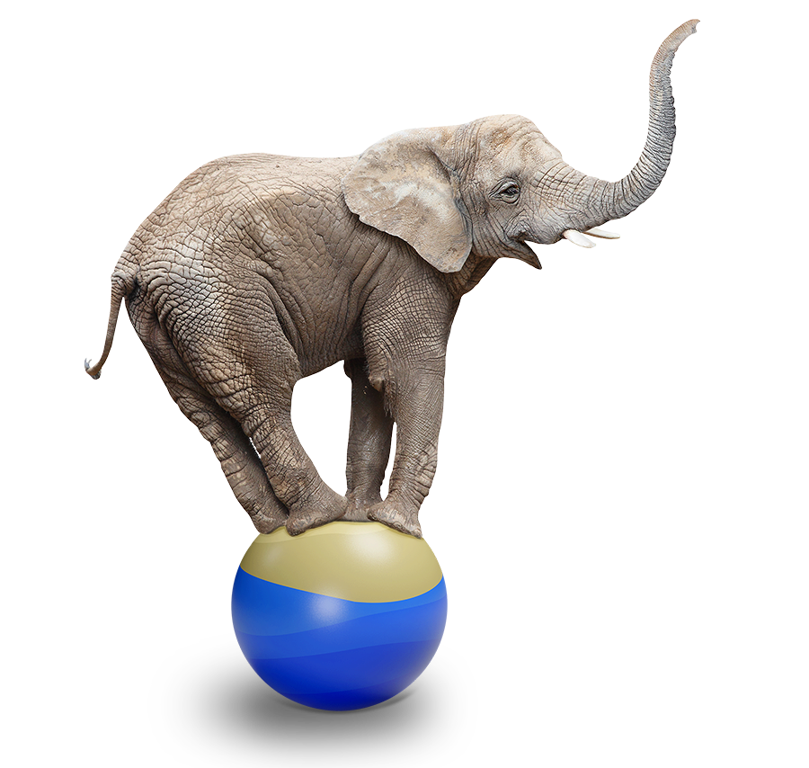 Brown Lawyers Homepage - smiling elephant balancing on a ball, representing: Life In Balance, our approach to preventive law