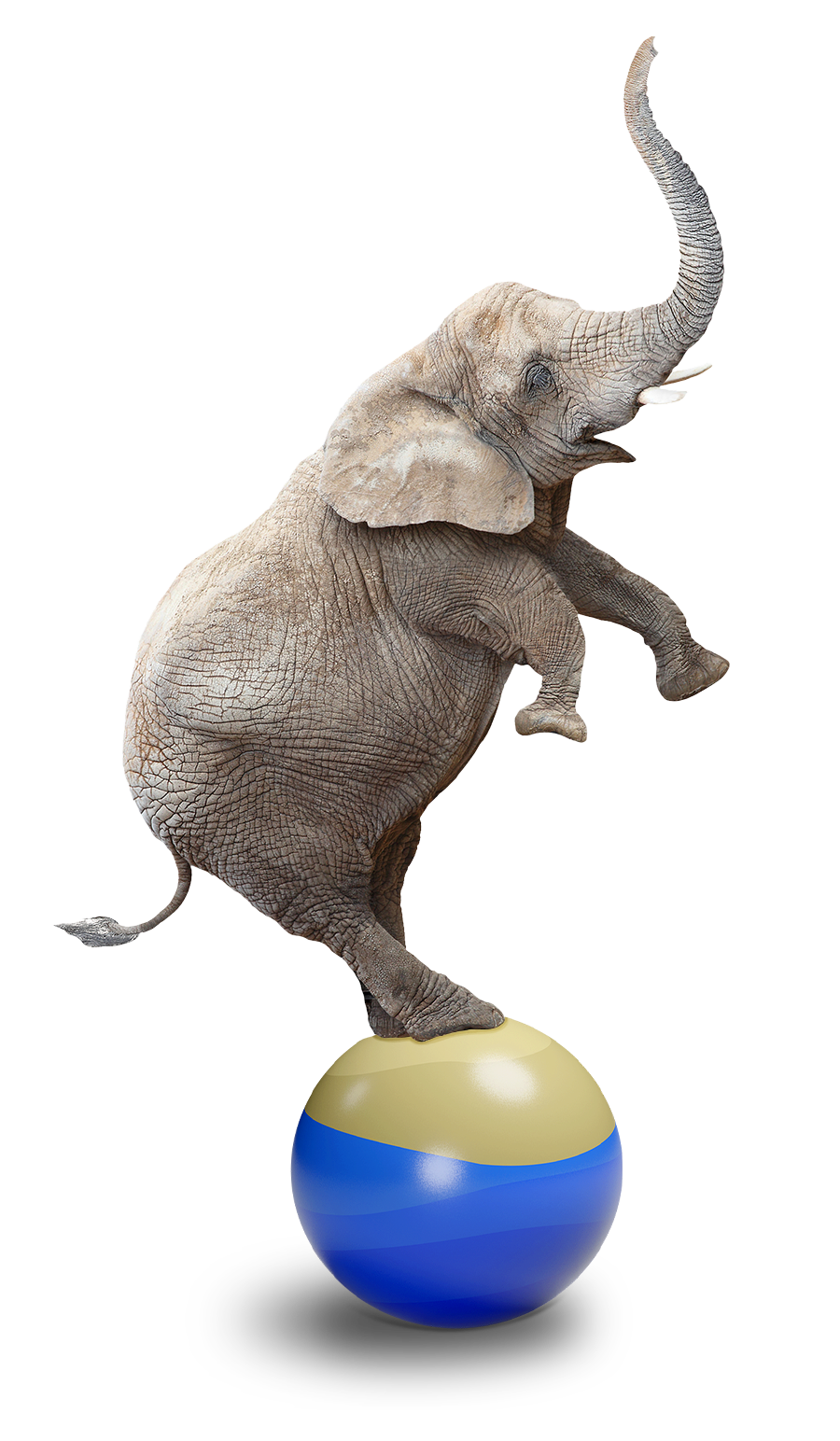 Brown Lawyers - Estate and Business Law - image of an elephant balancing on its back legs on a ball, symbolizing life in balance