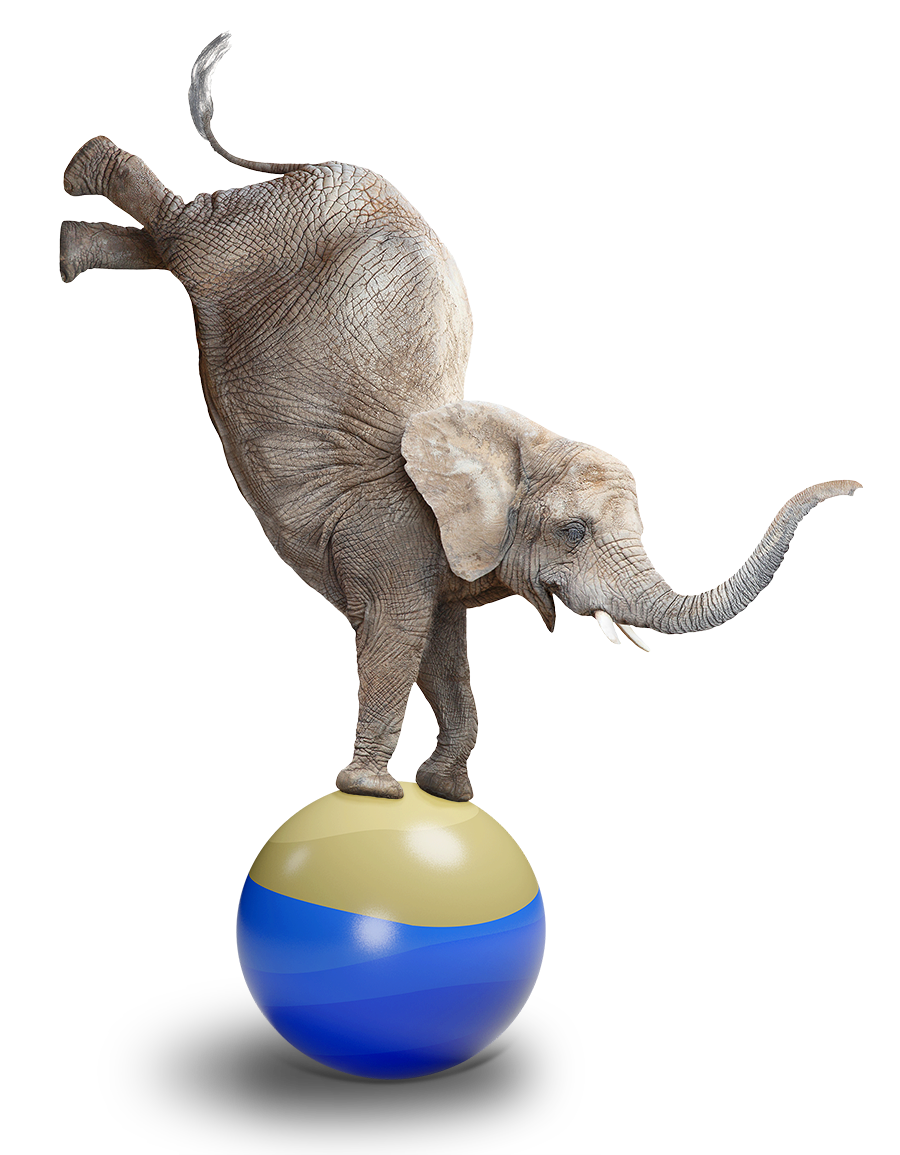 Brown Lawyers - What We do - image of a smiling elephant balancing its front feet on a ball, symbolizing Preventive Law